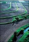 terraced farm field