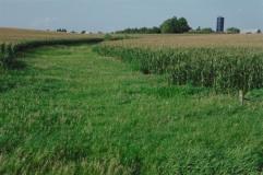 grassed waterway