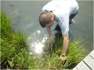 researcher examining grass on edge of water