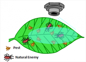 diagram of leaf with pest and natural enemies