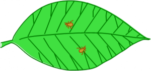 diagram of leaf with pests