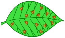 diagram of leaf with more pests after natural enemies are reduced by pesticides