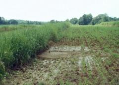 vegetative barriers