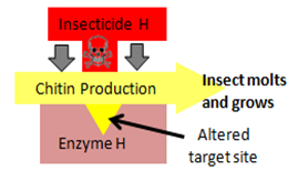 diagram showing target site altered in a resistant insect