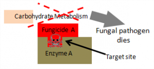 fungi that is not resistant to fungicide