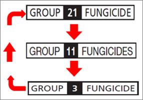 Fungicide rotation