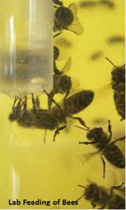 Pesticide Toxicity to Bees – Pesticide Environmental Stewardship