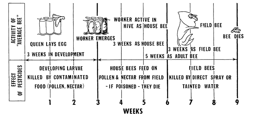 chart showing danger of pesticides to worker honeybees during their lifetime