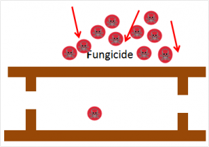 resistant pathogen absorbs fungicide