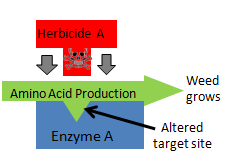 Herbicide action blocked due to altered target site