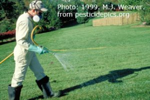 man spraying turf