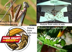 four types of insect control measures (predators, traps, parasites, crop rotation)